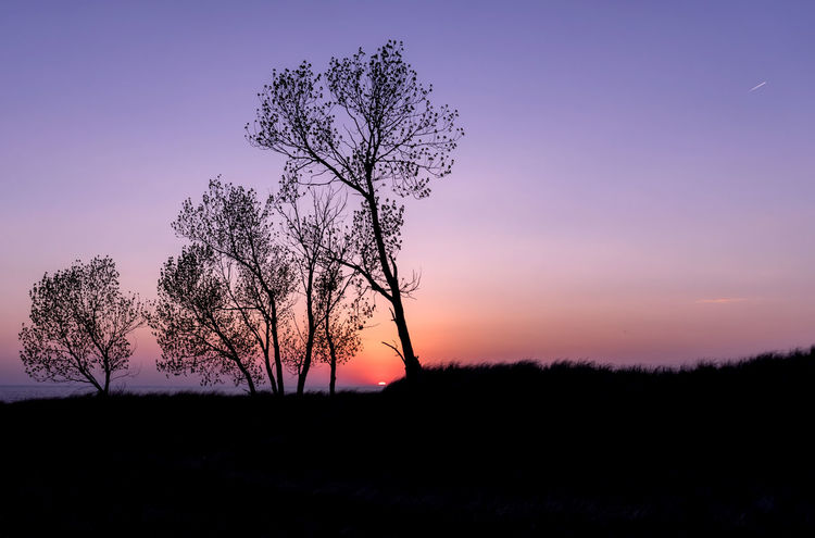A silhouette of trees on a dune, looking out at a colorful sunset. Colour Your Horizn Michigan Orange Bare Tree Beauty In Nature Colorful Horizon Landscape Lone Majestic Nature Night No People Outdoors Purple Scenics Silhouette Sky Sony Sun Sunset Tranquil Scene Tranquility Tree Tree Trunk