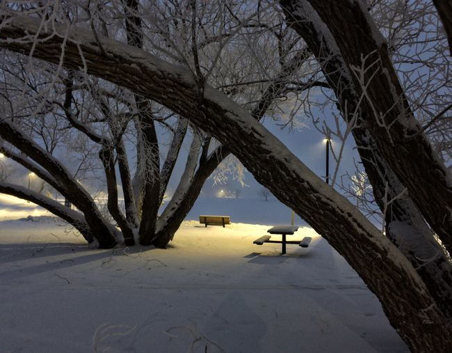 Night of frost IPhoneography Looking To The Other Side Snow Winter Trees Winter Bushes Iphonephotography IPhone Photography Iphonephotoacademy IPS2016Winter