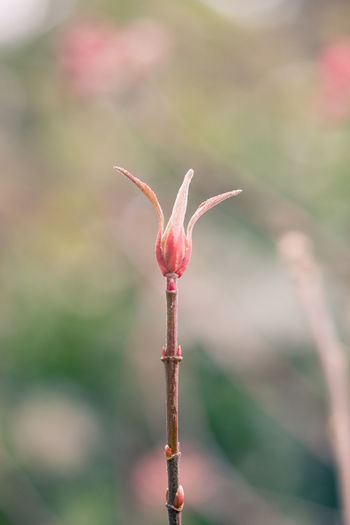 Springtime Buds Nature photography Pastel Powe EyeEmNewHere EyeEm Nature Lover Buds Nature Photography Beauty In Nature Bokeh Burst Of Buds Close-up Focus On Foreground Fragility Freshness Good Morning Growth Macro March Nature Nature Awakening Outdoors Plant Spring Springtime First Eyeem Photo