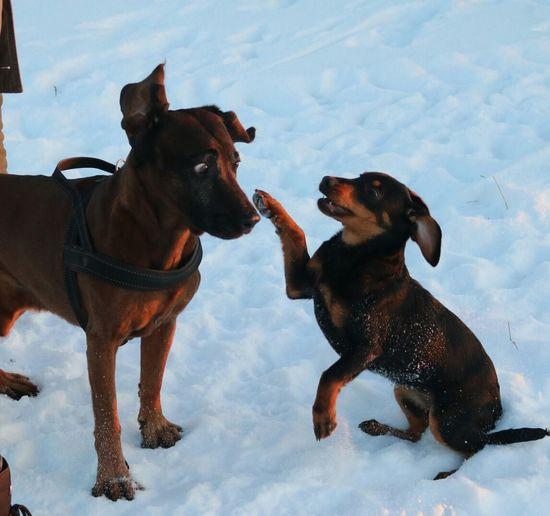 Dogs on snow against sky