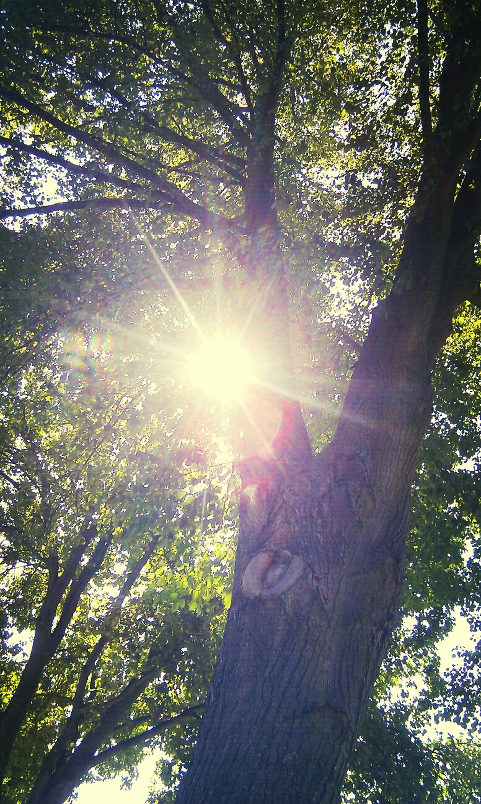 tree, low angle view, sun, sunbeam, sunlight, lens flare, tree trunk, branch, forest, one person, nature, growth, tranquility, back lit, day, sky, sunny, beauty in nature, outdoors, silhouette
