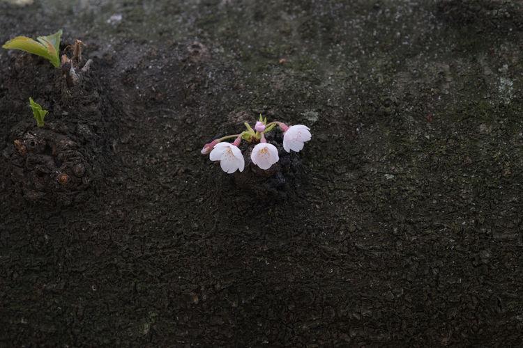 Three ? Plant