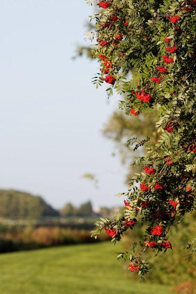 In The Field Flowers,Plants & Garden Red