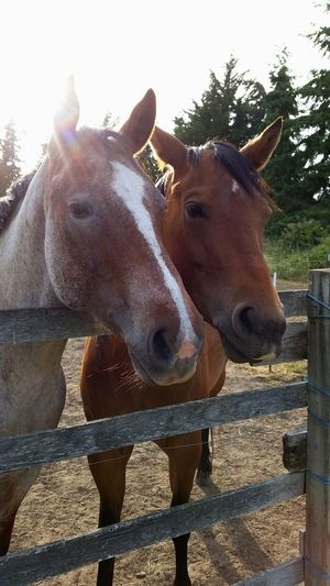 Horse Greeting Friends Buddies Hellothere Horses Horse Friends