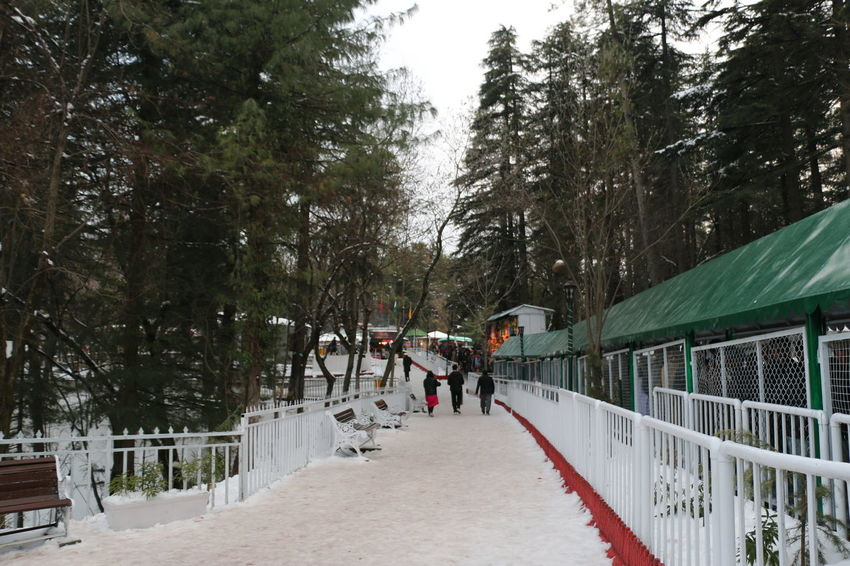 Adult Adults Only Beauty In Nature Branch Chairlift Cold Temperature Day Enjoying Nature Family Large Group Of People Men Nature Only Men Outdoors People Real People Sky Snow Snowing Togetherness Tree Winter