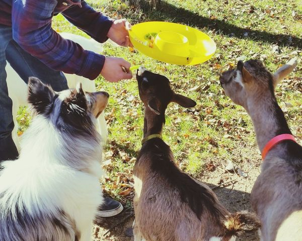 Baby Goat Goats Milo & Me Capture The Moment Petstagram Enjoying Life Pet Photography  Pets
