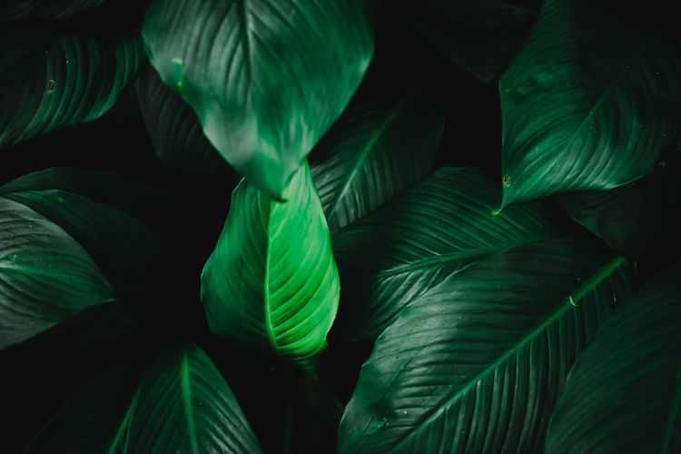 Green Color Leaf Plant Part Growth Full Frame Backgrounds No People Beauty In Nature Close-up Plant Nature Natural Pattern Pattern Outdoors Green Night Freshness Tree Botany Leaves Palm Leaf