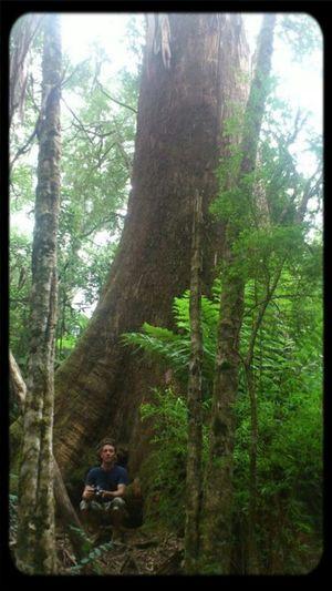 Trees @beaker303 In Otways Otways Tree Lover