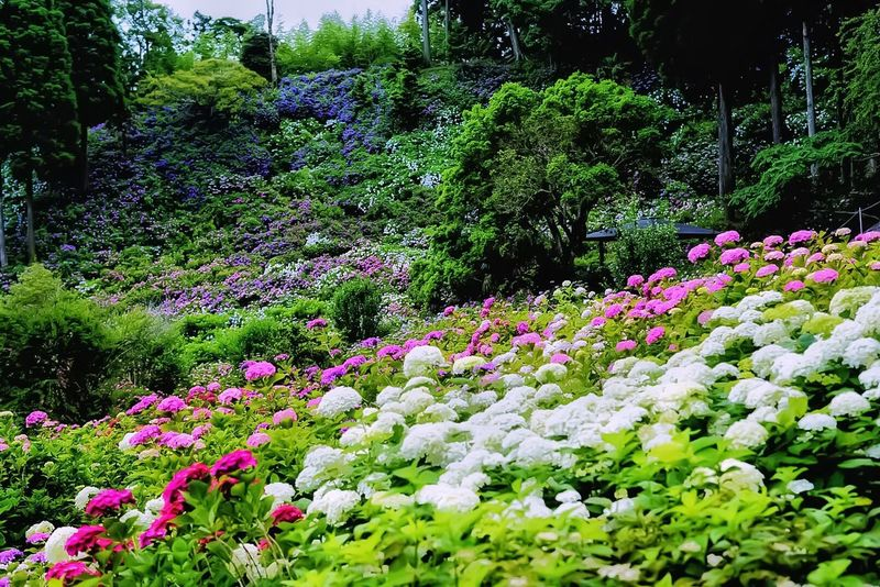 Flower Nature Beauty In Nature Growth Flowerbed Abundance Plant Tranquility No People Outdoors Summer Day Springtime Freshness Tree Multi Colored Botanical Garden Flower Head