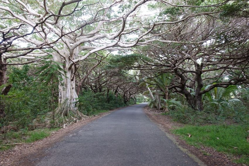 Trees in Ile des Pins, New Caledonia Ile Des Pins New Caledonia Oceania Melanesia Noumea Plant Transportation Growth Beauty In Nature Nature No People Forest