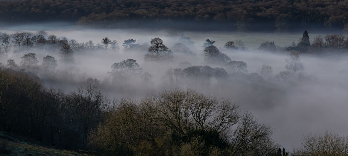 Panoramic view of trees in forest in fog