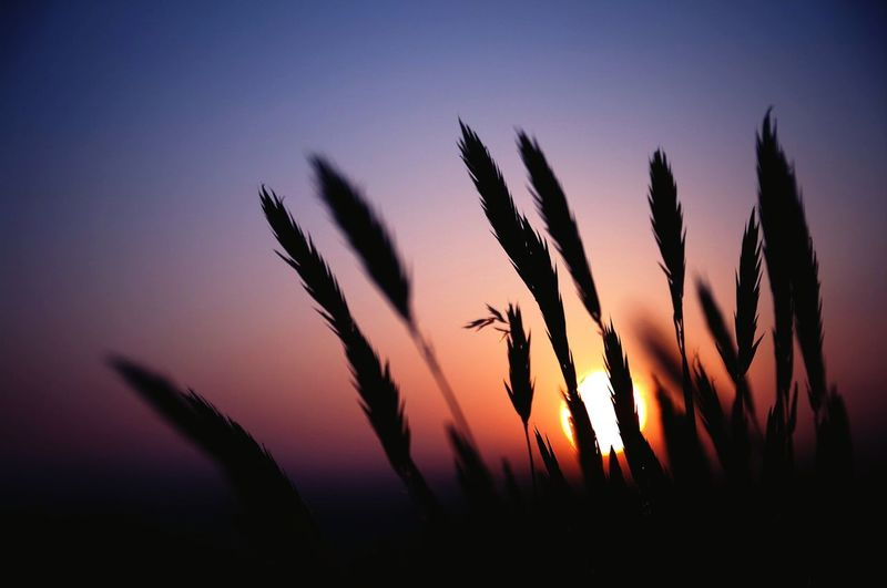 Nature Natural Beauty Sunset In The Field Art Of Capturing Wheat Field Love Peace ✌ Nature_collection