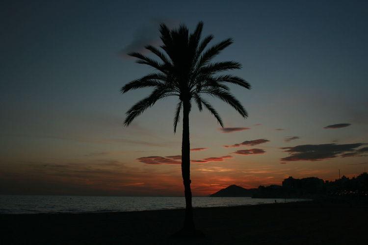 Palm tree silhouette in sunset light. Benidorm, Spain. Benidorm Benidorm, Spain Beach Beauty In Nature Horizon Over Water Nature Night Palm Tree Scenics Sea Silhouette Sky Sunset Tranquil Scene Tranquility Tree Water