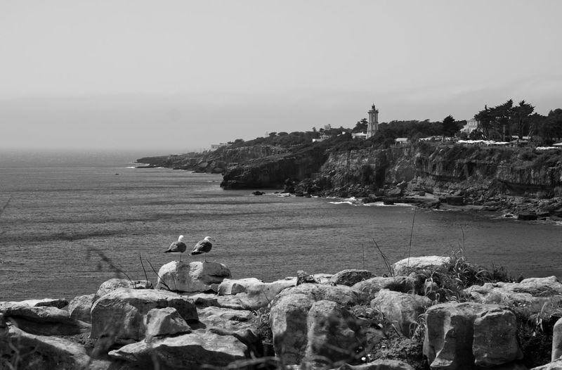 Birds Rocky Coastline Shore Coast Rock Formation Tranquil Scene Eroded Calm Ocean Coastline
