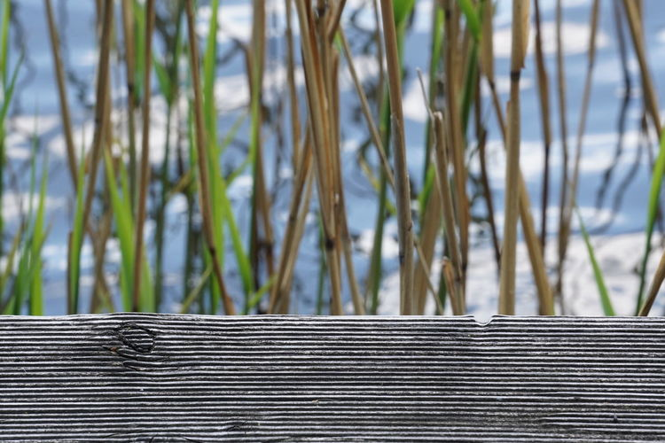 Wooden fence against plants