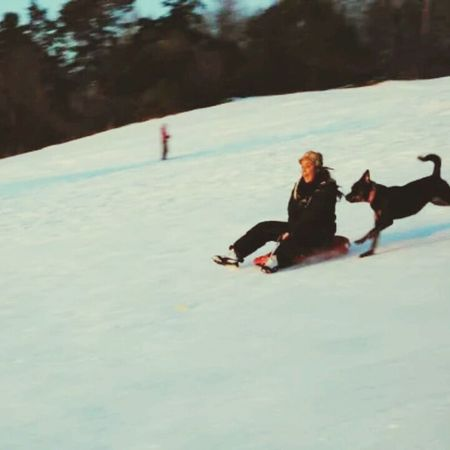 What Does Freedom Mean To You? Rottweiler Playful Winterfun
