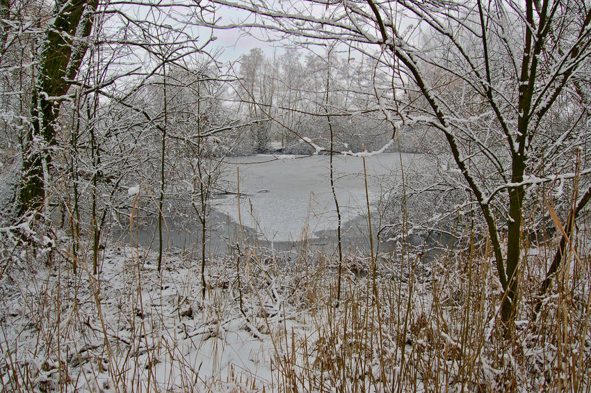Frozen Nature Bare Trees Frozen Nature Lake No People Outdoor Photography Snow ❄ Trees Water White Foreground Wintertime ⛄ Ice Stroll
