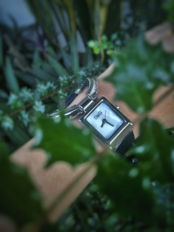 D&G(Dolce&Gabbana) D&G Watch D&G Watch Wristwatch Wrist Clock Time Technology Photography Themes High Angle View Tree Plant Part Flower Nikonphotographer Photographer Nikonphotography Photojournalism Beauty In Nature Plant Fashion The Week On EyeEm