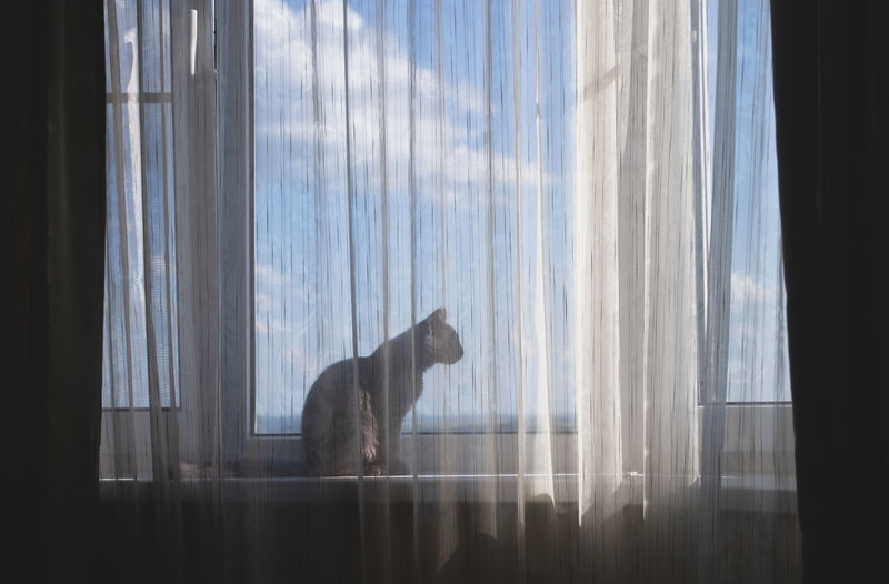 Side view of a cat looking through window