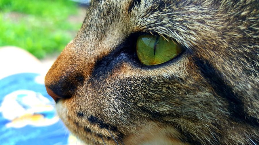 Close-Up Cropped Image Of Cat Looking Away