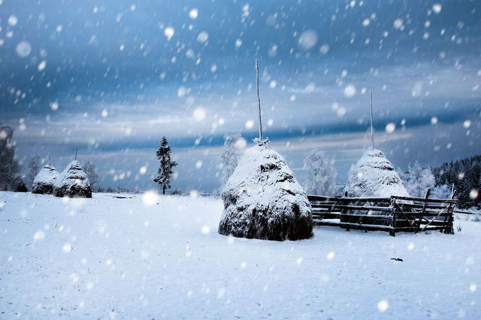 Snowfall in the mountains. Snowy haystacks Christmas Hoarfrost Snow ❄ Winter Winter Vacation Wintertime Xmas Christmas Tree Cold Cold Temperature Fir Greetings Nature No People Pine Tree Snow Snowflake Snowing Spruce Trees White Winter Winter Holidays Winter Postcard Winter Trees Winter Wonderland