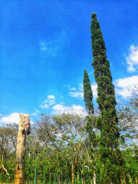 Enjoying Life EyeEmNewHere EyeEm Nature Lover Tree Blue Sky Plant Green Color Flower Head Countryside Green