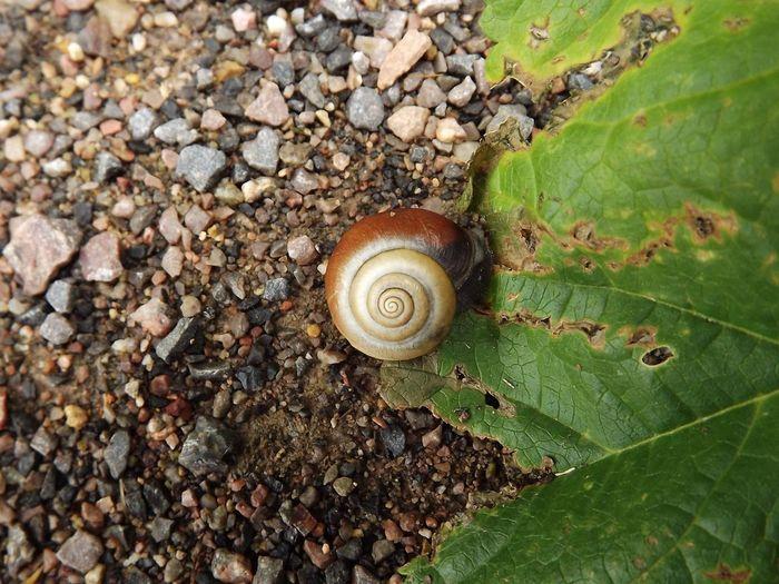 Snail🐌 Snail