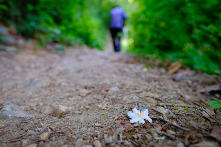 The end of spring Alone Fallen Flowers Hiking Loneliness On The Trail Abandoned Beauty In Nature Close-up End Of Spring Fallen Fallen Flower Fragile Fragile Beauty Fragile Flowers Fragile Nature Hiker Leaving Left Behind Left Behind To Nature Lone Nature Outdoors The End The End Of Spring Trail