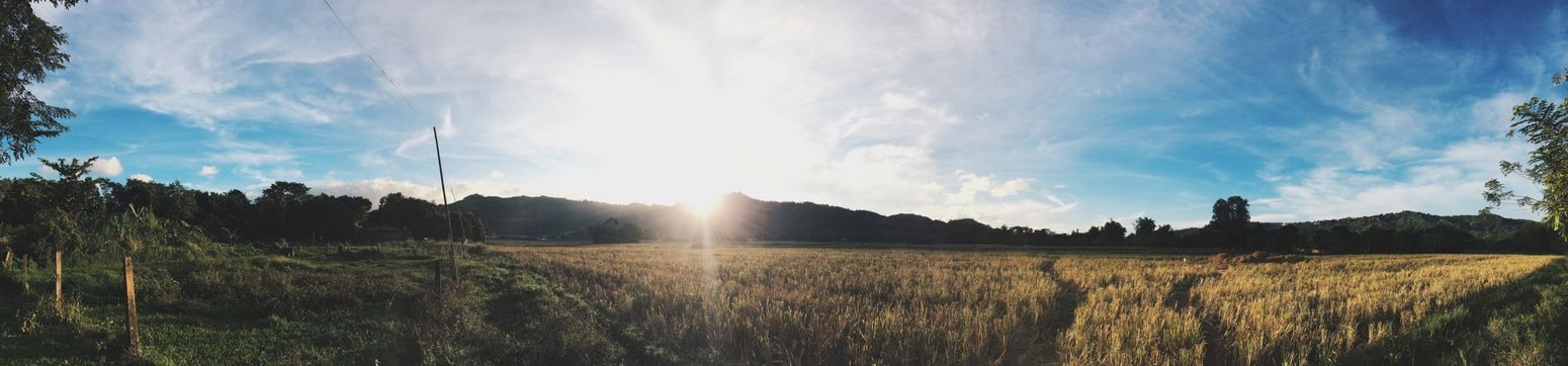 Panorama Rice Field Mountains Taking Photos IPhone Photography VSCO Cam Morning Sunshine Early Morning