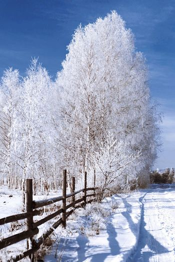 Snow Winter Cold Temperature Nature White White Color Shades Of Winter Beauty In Nature Tree Outdoors Tranquility Tranquil Scene Day No People Blue Scenics Frozen Sky Landscape 17.62°