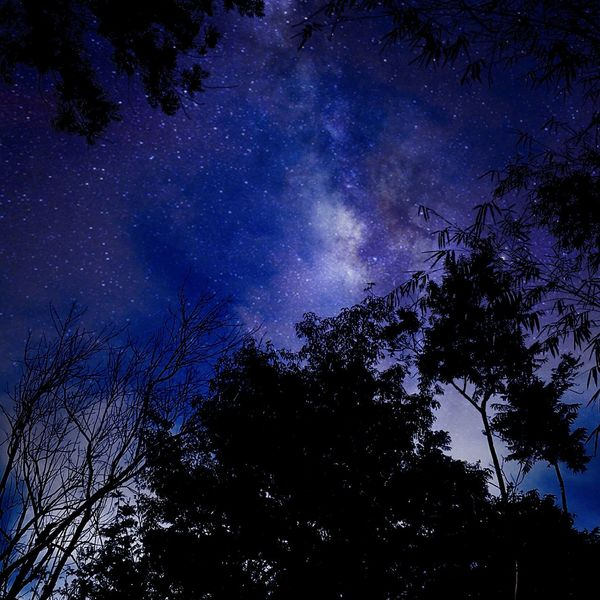 Malaysia Janda Baik Night Nightphotography Starry Night Night Sky Forest