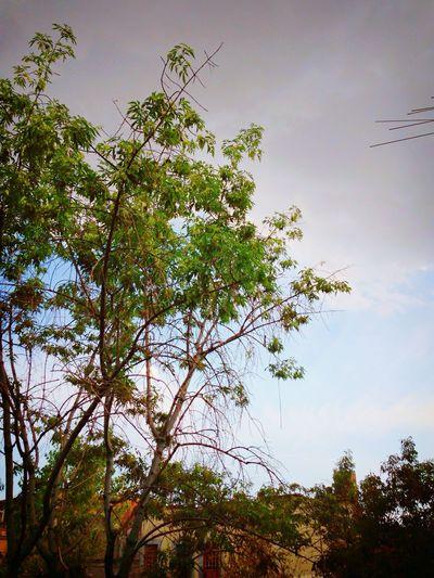 How's The Weather Today? Ciudad De México A punto de lluvia, el Chipi Chipi