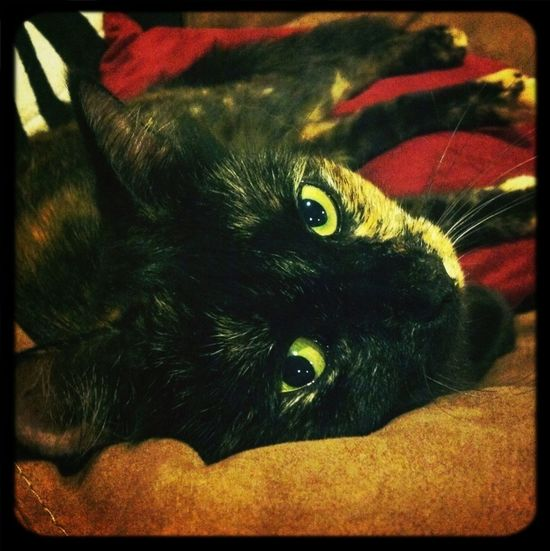 Moos Cat