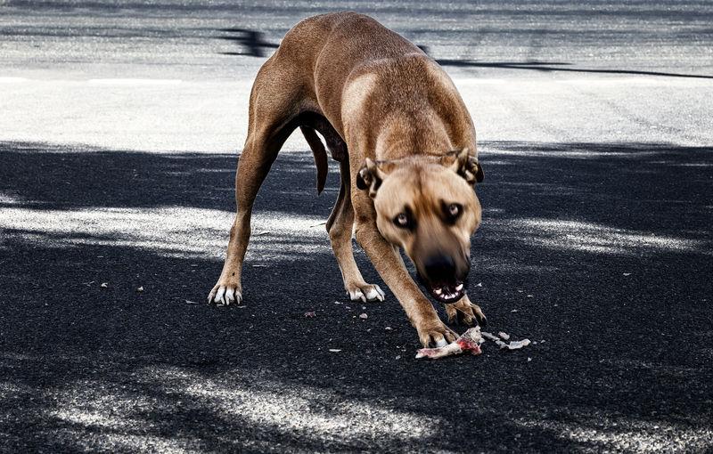 Animal Canine Dog One Animal Pets Road Shadow Street