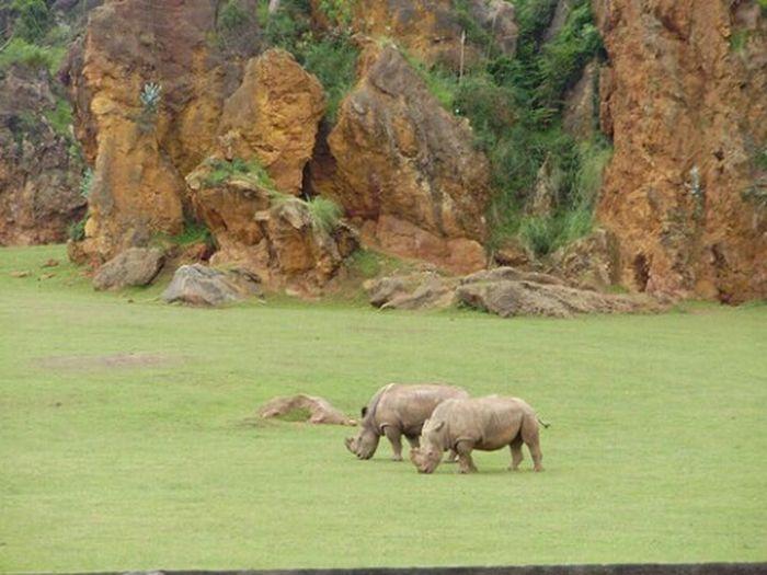 Cabarceno Rinhoceros Zoo Animals