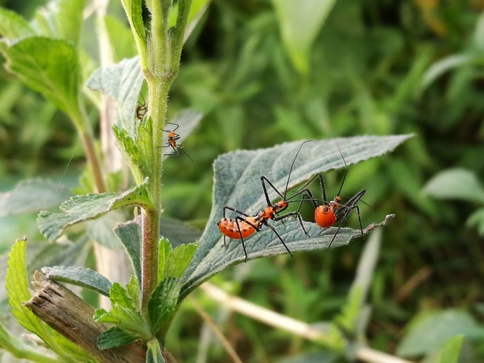 It could be a family! :) Plant Insect