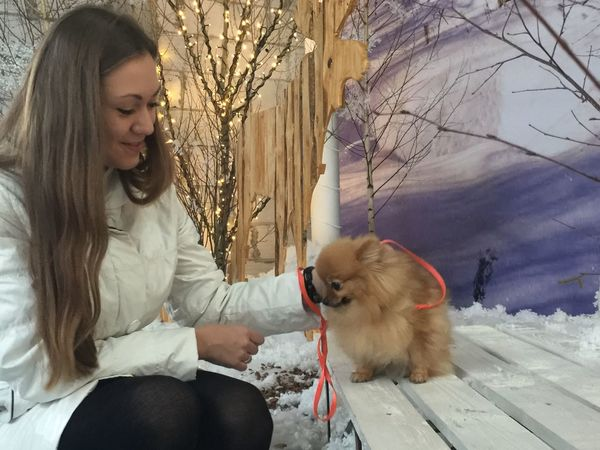 New Year Celebration Pomeranian Dog Cute Pomeranian Holidays Christmas Emotions Cute Pets EyeEmNewHere Spitz Mammal One Animal Domestic Domestic Animals Pets Canine Dog One Person Real People Women Young Adult Casual Clothing Sitting Young Women Pet Owner Positive Emotion Leisure Activity Teenager