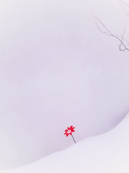 warm in winter Rosa Wall Art Eye4photography  Eyemgallery Snow ❄ Cold Eyem Art Eyemart Snow Winter Cold Temperature Red Frozen Outdoors Nature Day Colour Your Horizn