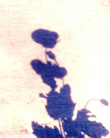 Poppy flower shadow on wood with vintage fllter Poppy Flower Shadow Poppyflower Shadow On Wood Poppyflower Shadow On Wood With Vintage Filtet Flower Shadow Flower Shadow On Wood Flowrr Shadow On Wood With Vintage Filtet Shadow Poppy Flower Wood Shadow On Wood Vintage Vintage Filter Sunny Bright Leafs Flower Bud Flower Button