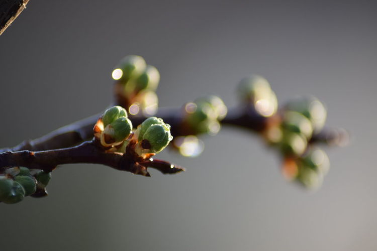 Growth Close-up