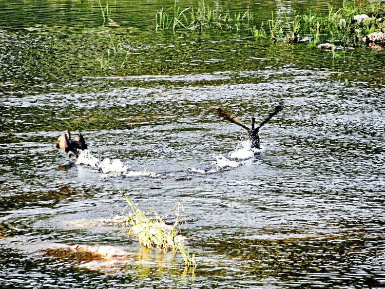 River Birds Nature VillaCarlosPaz