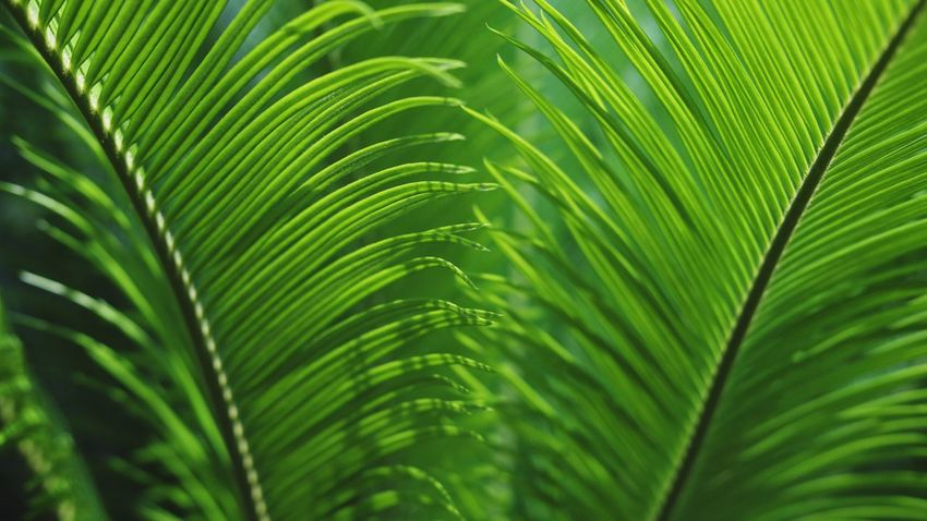 Texures Textures In Nature Leaf Palm Tree Frond Fern Leaf Tropical Climate Palm Leaf Close-up Plant Green Color Rainforest Leaf Vein Leaves Natural Pattern