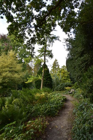 Beauty In Nature Beth Chato Gardens Branch Day Elmstead Market Essex Forest Grass Green Color Growth Lush Foliage Nature No People Outdoors Path Scenics Sky Tranquil Scene Tranquility Tree Tree Trunk WoodLand Woodlandwalks