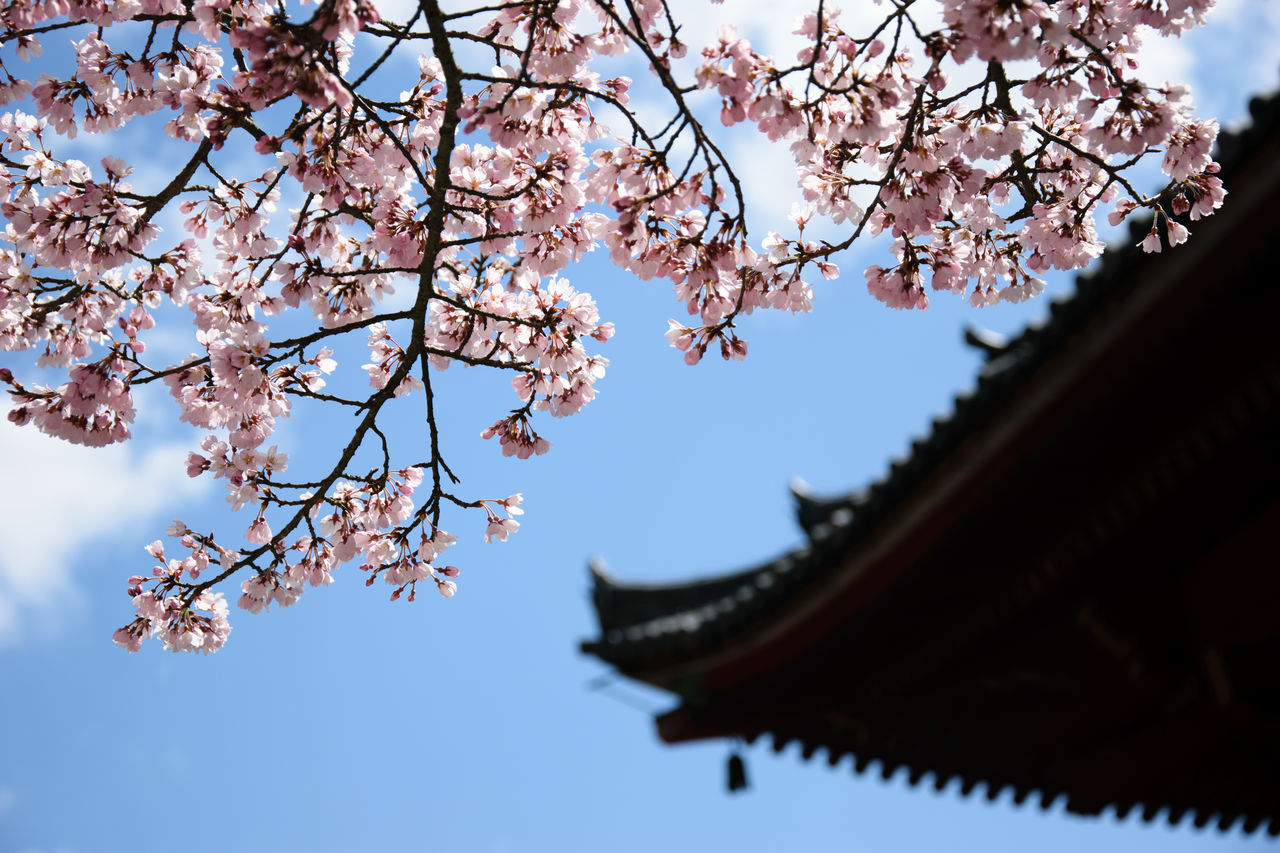 Low Angle View Of Cherry Blossoms And Roof Against Sky