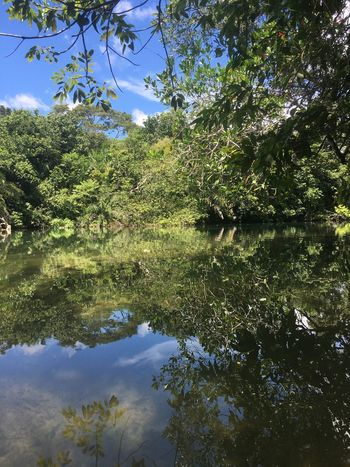 EyeEmNewHere Eye4photography  EyeEm Best Shots Water Nature Reflection Tree Outdoors Tranquility Lake Growth Scenics Green Color Sky Day No People Beauty In Nature EyeEm Best Edits Lush - Description Eco Tourism Vacations Tropical Climate Beauty In Nature Tranquility EyeEmBestPics