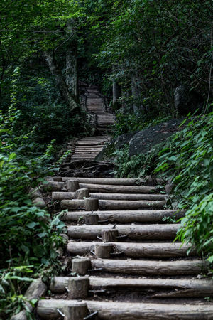 A pathway to the top of Mount Tsukuba in Japan. Climb EyEmNewHere Nature Path Tree Forest Ramp Walkway Woods