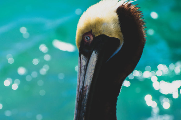 A Pelican's Eye EyeEmNewHere Animal Animal Body Part Animal Eye Animal Head  Animal Neck Animal Themes Animal Wildlife Animals In The Wild Beak Bird Close-up Day Eye Focus On Foreground Nature No People One Animal Outdoors Vertebrate Water Zoology