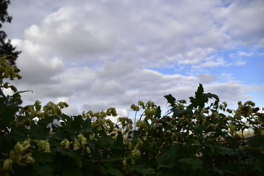 Beauty In Nature Beth Chato Gardens Cloud - Sky Day Elmstead Market Essex Growth Horizontal Leaf Nature No People Outdoors Plant Sky Tree