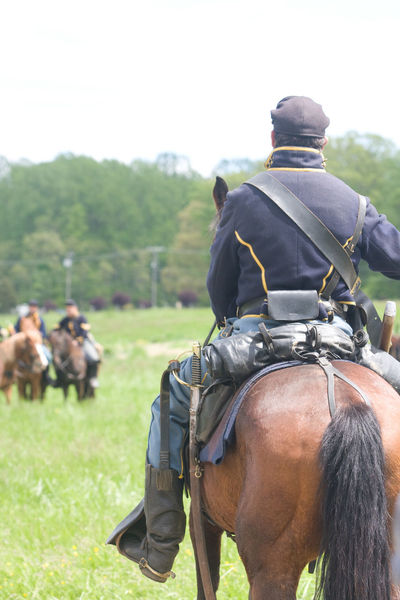 Civil War Civil War History Civil War Re-enactments Domestic Animals Horse Livestock Mammal Reenacting Reenactment Reenactors Working Animal