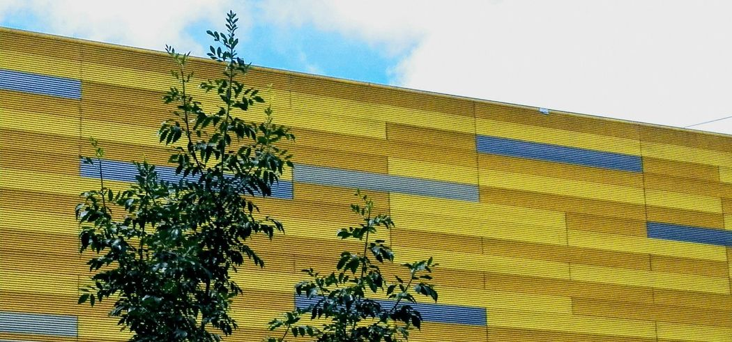 Yellowmagic Growth No People Day Yellow Built Structure Low Angle View Sky Building Exterior Nature Outdoors Architecture Close-up Text Tree